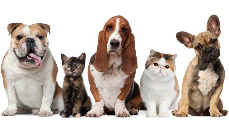 Hayvan dostlarımıza isim verirken kimimiz çok farklı bir isim verirken kimimiz ise isim tercihinde biraz daha kolaya kaçıyoruz. Zaman ne kadar ilerlese de hayvanlara verilen bazı isimler hiç eskimez. Hepimizin çevresinde mahallesinde, ailesinde bu isimlere sahip hayvanlar vardır. İşte yaratıcılığı kenara bakıp hayvanlarımıza verdiğimiz en nostaljik ve ölümsüz 15 hayvan ismi. Detaylar ajanimo.com'da.. #ajanimo #ajanbrian #hayvan #animal #dog #cat #kedi #köpek