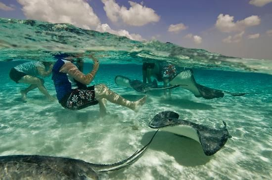 #GrandCayman - Swimming with the sting rays about 5 miles off the coast of George Town
