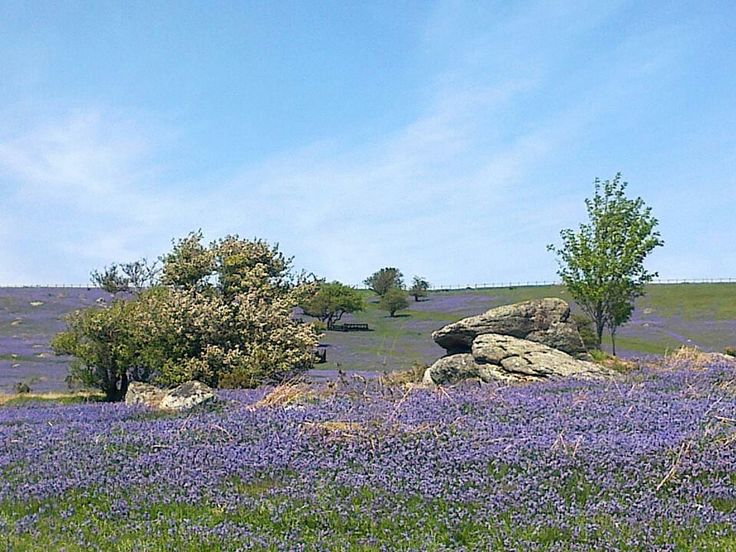 Pin by West Down House Holiday Cottages on Dartmoor