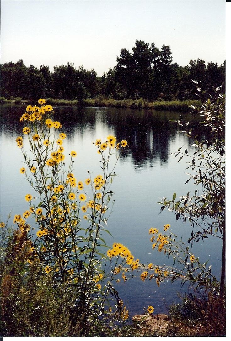 Lake At RV Park In Wheatridge Co