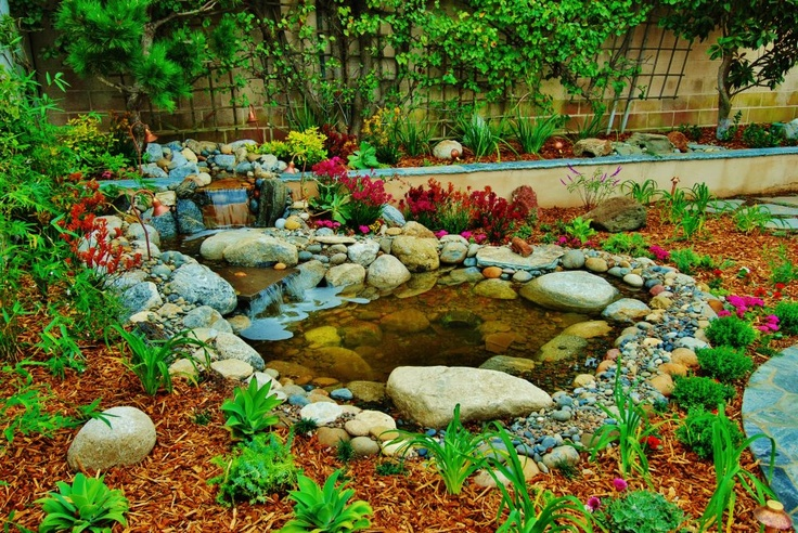 Beautiful pond with waterfall in los angeles back yard for Pond shape ideas