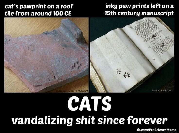 Cats even in early history were getting into things they weren't supposed to be