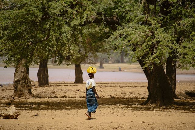 'Landscapes approach' could alleviate West Africa climate change woes – scientists   #ClimateChange