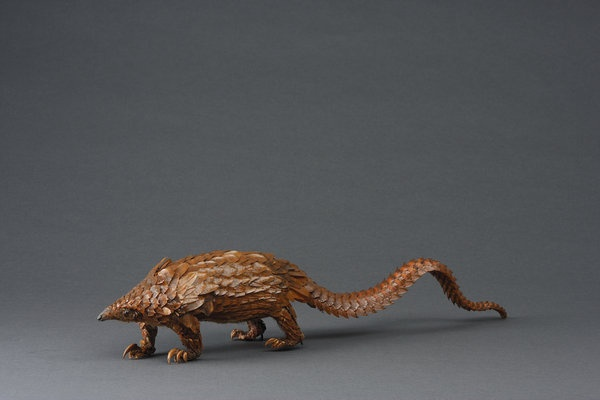 A Victorian Specimen of a Southern African Temmincks Pangolin (1800 to 1900 South America) - The Pangolins curious covering of bony overlapping scales acts as both body armour and as camouflage. The overlapping scales are moveable and hard edged and are probably developed from modified hairs like the horn of a Rhinoceros. Pangolins lack teeth, but have an extremely long protrusible tongue in an elongated head, which is used to catch its insect prey. Its food is ground down in a muscular…