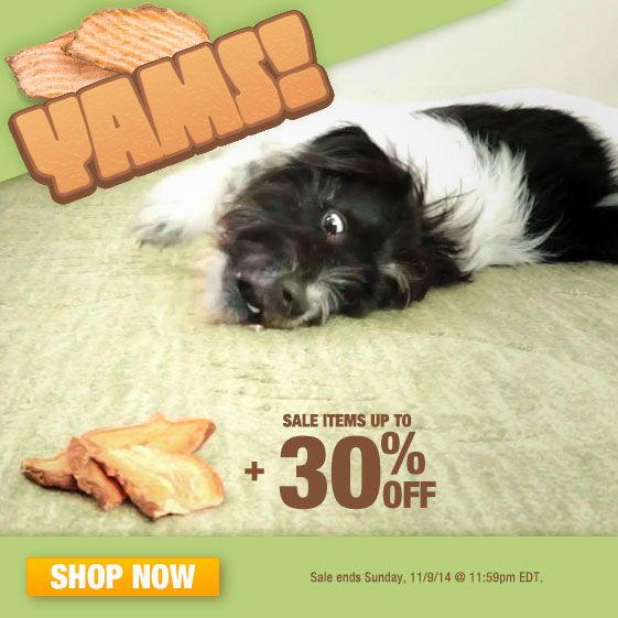 Best All Natural Dog Treats Chews Images On Pinterest Bad - Every day this dog goes shopping all by himself to get treats