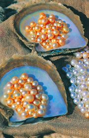 Broome Pearls - Australia. Beautiful. Shopping for pearls is a must do in Broome.