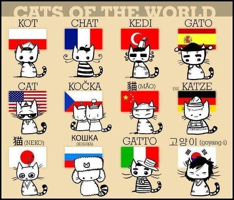 how to say cat in different languages