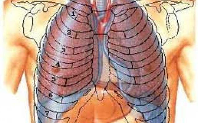 Apparato respiratorio: La respirazione polmonare #respirazione #polmoni #ventilazione