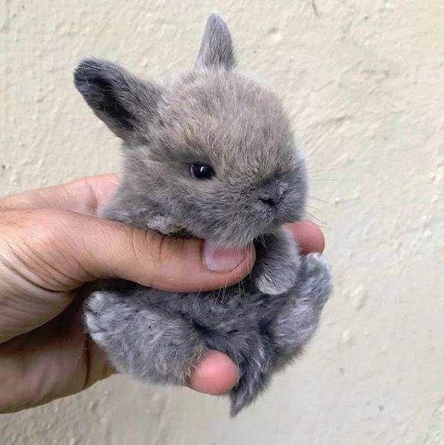 Baby Kaninchen   – Picdump