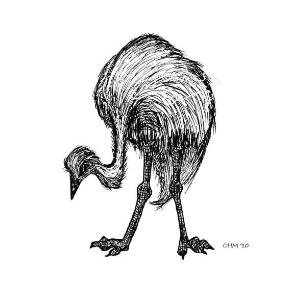 Line Art Emui : Best images about art australian animals on