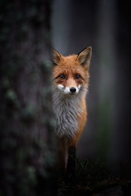 """""""Goodbye,"""" said the fox. """"And now here is my secret, a very simple secret: It is only with the heart that one can see rightly; what is essential is invisible to the eye."""""""