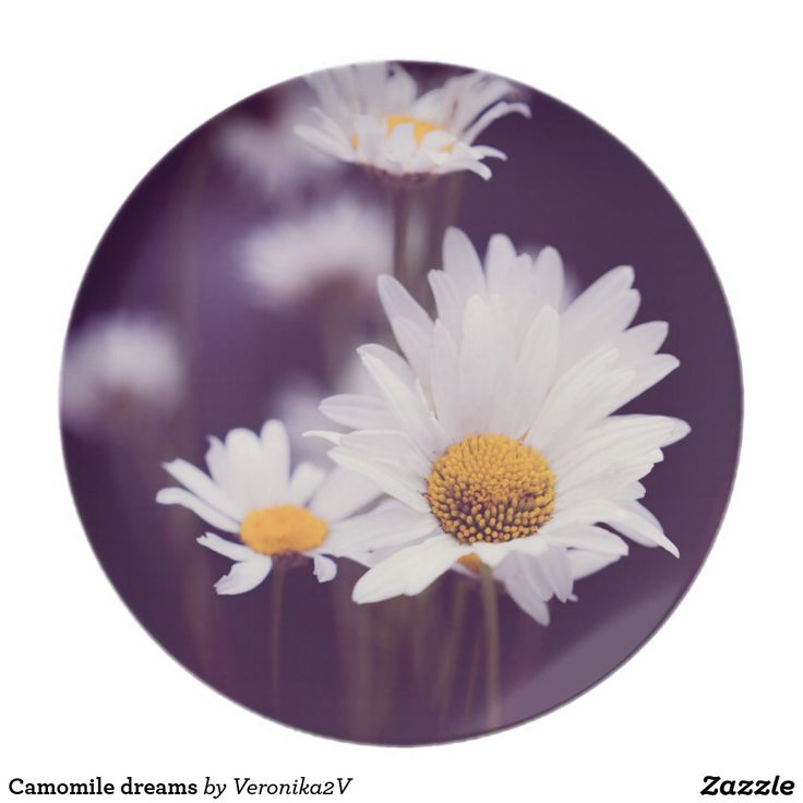 Camomile dreams plate. photo, photography, artwork, buy, sale, gift ideas, camomile, flowers, divination, love, violet, purple, liliac, white, dreams, bright, colorful, glow, petals, dark, home, home decor, comfort, plate