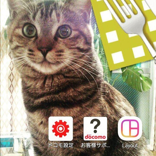 16歳にはとても見えないキュートな美魔女にゃんこのももちゃん @m.mugi のママから #ロック画面バトン を受けとりました😊 ありがとうございます💕  私は一度設定しちゃうとそのままだから、この麦の写真もだいぶ前に撮ったものです😅スマホはドコモのAndroid、そろそろ新しいのに変えたいなぁ~。 バトンは置いておくので、みんなのロック画面も見せてね😉 😸 😸 #猫 #ネコ #愛猫 #保護猫 #保護猫出身 #猫好きな人と繋がりたい #ふわもこ部 #キジサビ #むぎわらねこ #ムギワラネコ #むぎわら猫同盟  #にゃんすたぐらむ #にゃんだふるらいふ #catstagram #mylovelycat #PMENS