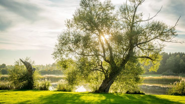 A lonely tree by the lake in Svartsjö, Sweden, on the last day of September. Still a bit of summer left in the air.