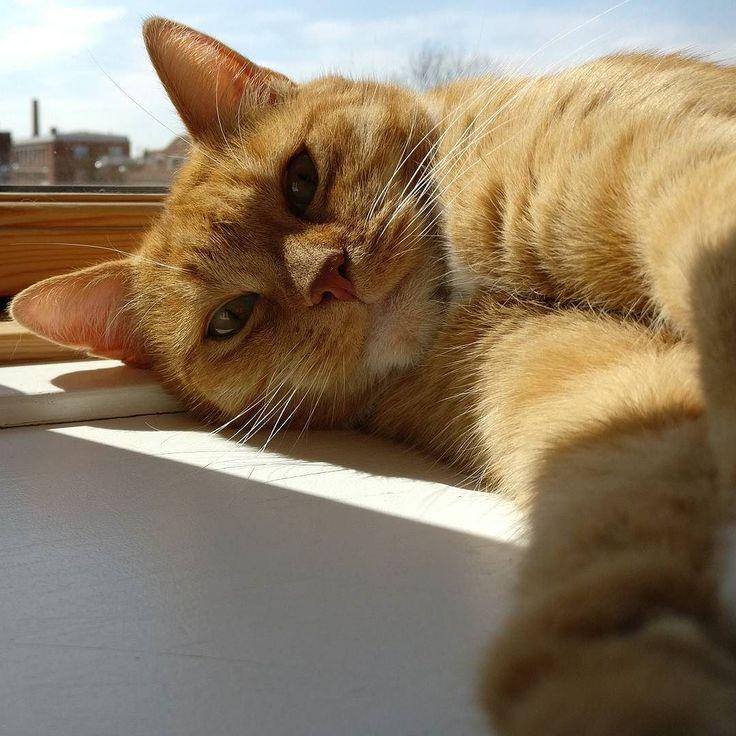 Enjoying the sun in the window sill #cat #lazysaturday