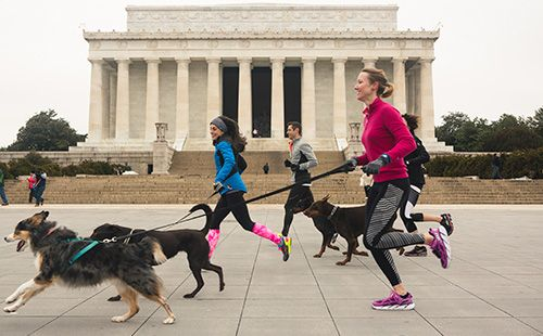 Veterinary neurosurgeon Laruen Talarico is the founder of We Ruff DC, a running club specifically for dogs and their owners that's based in Washington, D.C. Talarico provides free training programs and support to help two- and four-legged runners alike