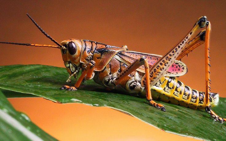 Grasshopper x