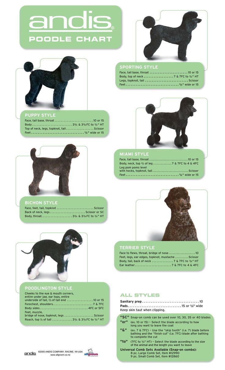 poodle grooming chart: