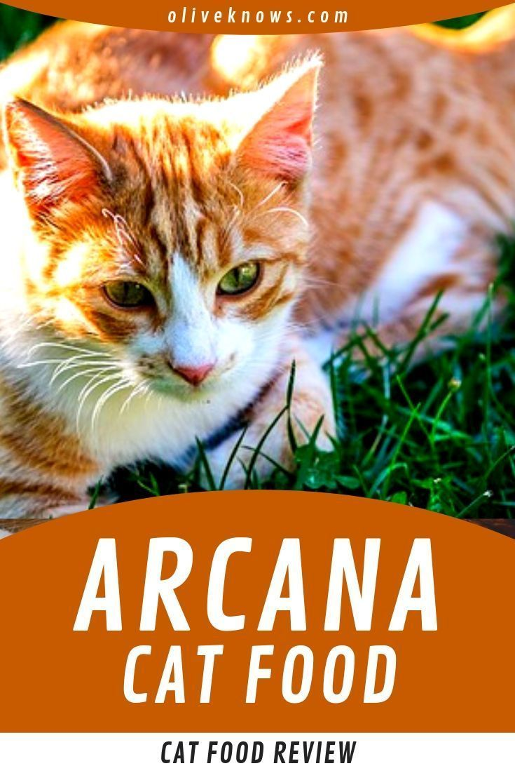 Acana Cat Food Review A Cat Expert Overview Acana Cat Foods Are