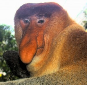 I take on the proboscis monkeys in Brunei - In The Know Traveler