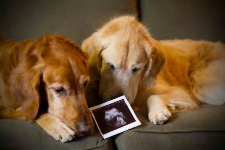 Puptastic baby announcements!