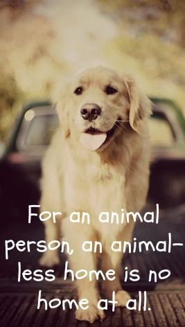 This is so true for me. I need a dog for my home to truly be home