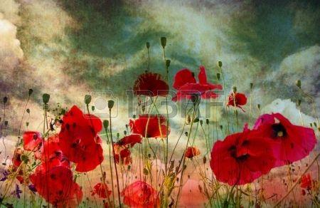 Amapola flor en el cielo Foto de archivo - 18054092