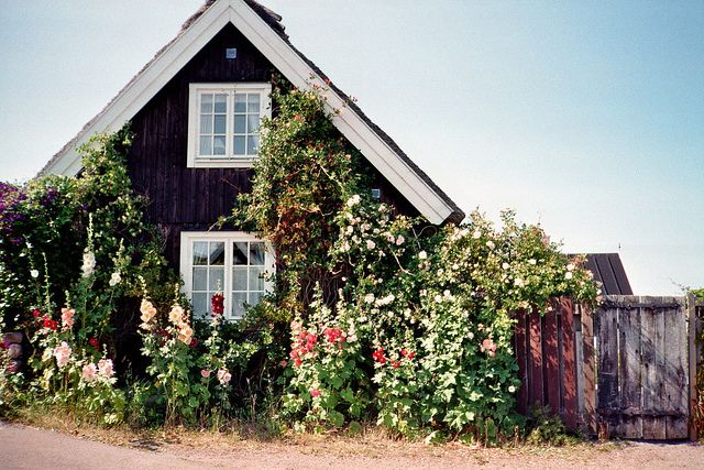 Beautiful flowers covering a house