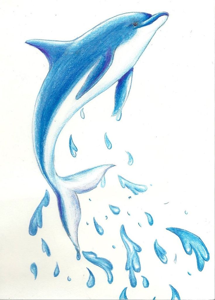 dolphin drawing - Google Search