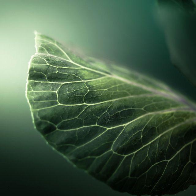 Free porn green leaf