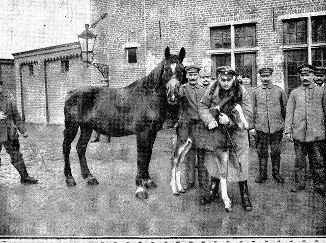 Opeisingen van paarden door de Duitsers by mathildepaukens, via Flickr