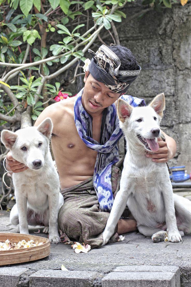 Kintamani Dog and they owner, Gatot Subroto 2015