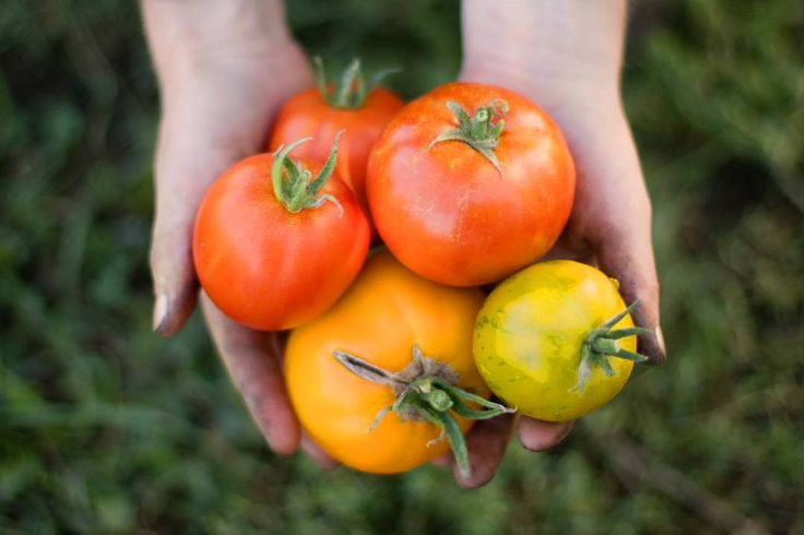 The top 10 organic food delivery options in Toronto