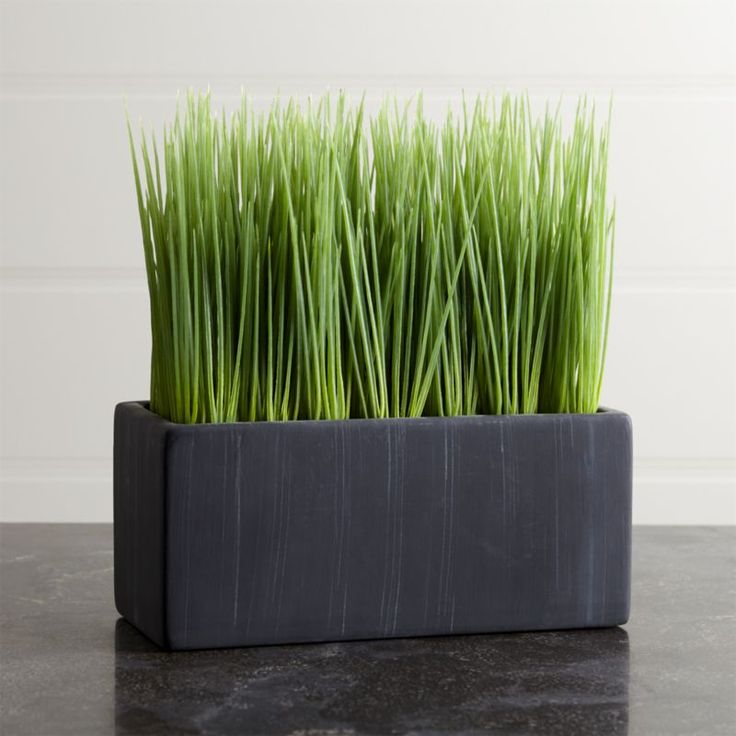 Large Potted Grass Reviews Crate And Barrel In 2019 Cheap Artificial Plants Small