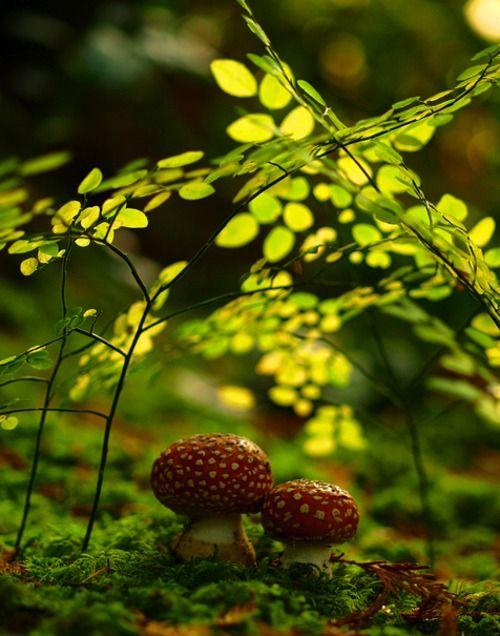 Fungi, mushroom, macro