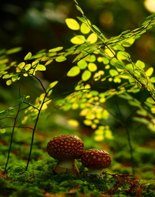 fungi via spiritual serenity
