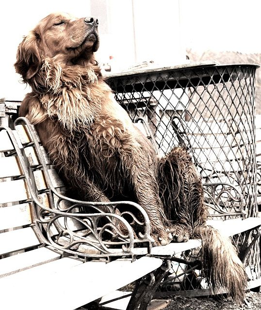 Dog. A little mud, a little sun...life is good. http://www.annabelchaffer.com/categories/Dog-Lovers-Gifts/