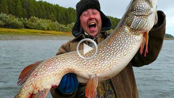 Рыбалка на живца Ловля щуки на удочку Best Fishing Вот это рыба Жесть Пр...
