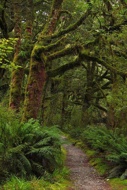 Clinton Valley Rainforest in Fiordland National Park, New Zealand