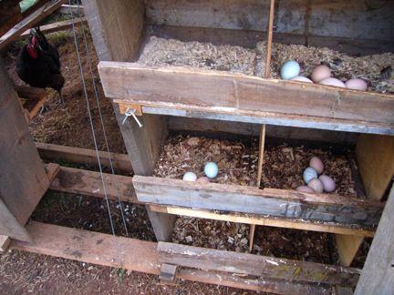 63 Best Maggie's Hen House Range Images On Pinterest Chicken