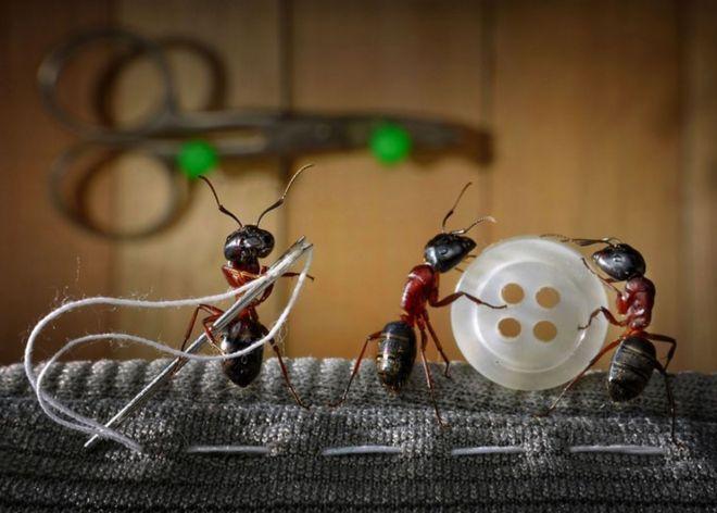 КАК БОРОТЬСЯ С БЫТОВЫМИ НАСЕКОМЫМИ?  Сохраните! 📌  1. Мухи. Комнатные мухи не выносят запаха пижмы: если в комнате будет это растение, мухи улетят.  2. Меньше мух будет залетать в окно, если смазать рамы уксусом.  3. Мухи не выносят запаха воска, скипидара, касторового масла, а больше всего — керосина.  4. Когда моете окна и полы, добавляйте в воду немного керосина. Летом затяните окна марлей в два слоя или повесьте на форточку нарезанную полосками бумагу.  5. Старый и испытанный способ для…