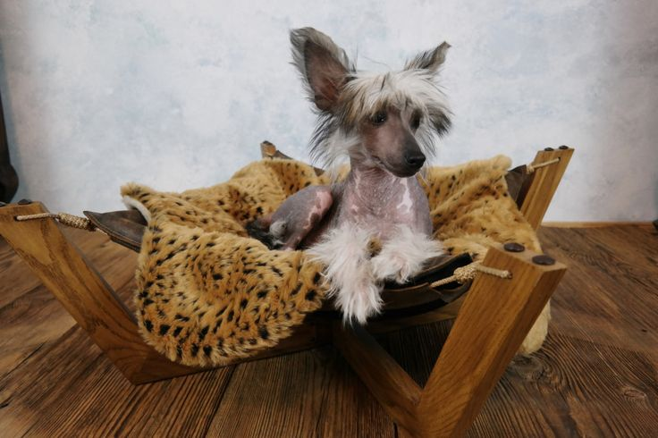 Leather pet bed - hammock style by ooMelampus on Etsy