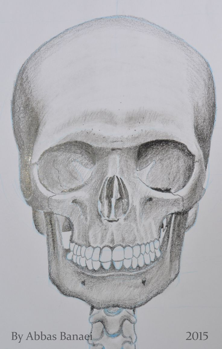 Front view of the skull. Pencil. 20*30 Cm