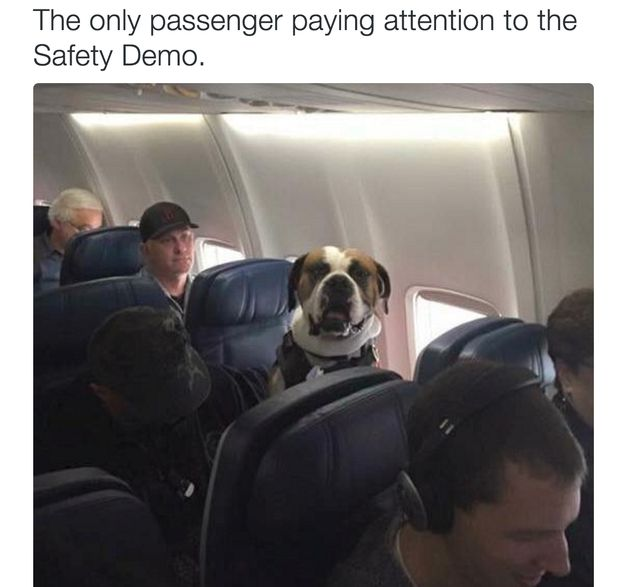 This reality: | 23 Pictures That Are Way Too Real For Flight Attendants