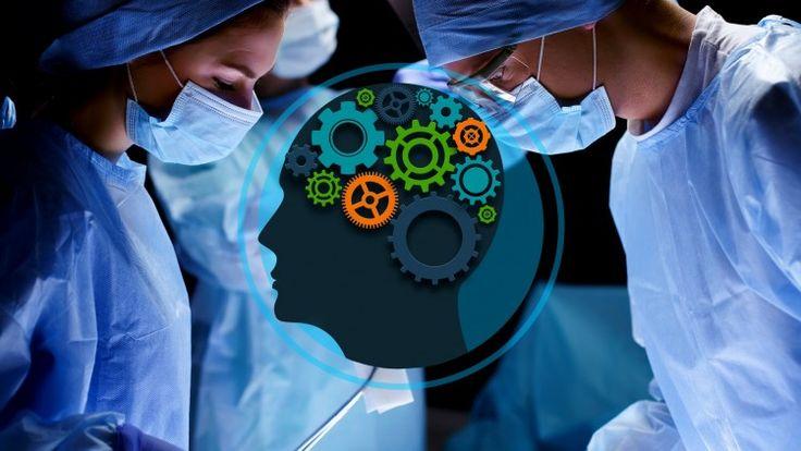 Brain anatomy course