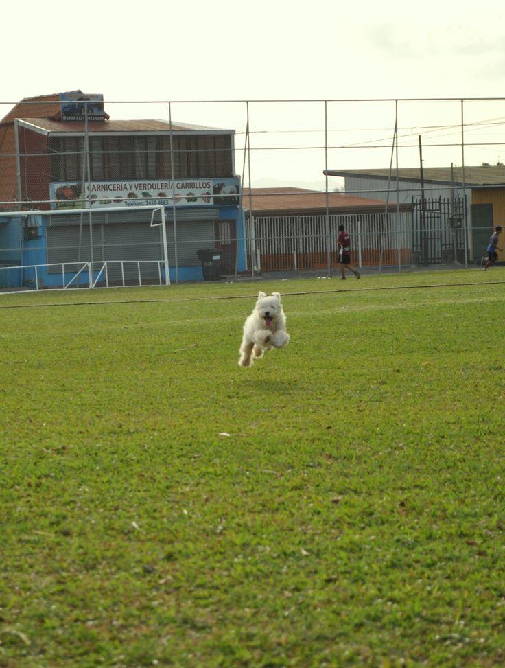 deporte de mascotas