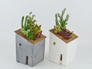 Succulents in a little house.