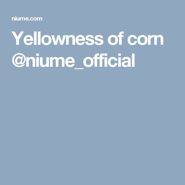 Yellowness of corn @niume_official