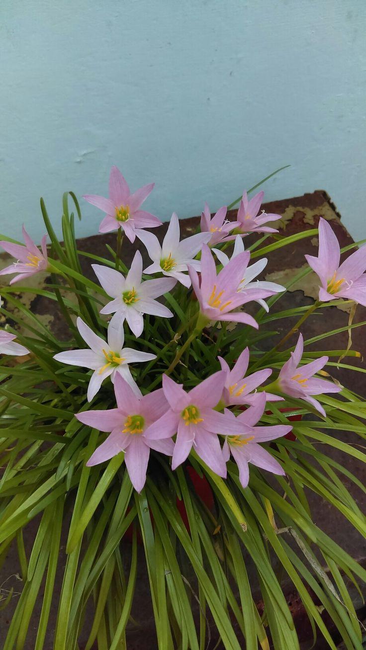 Florecidas del jardín.
