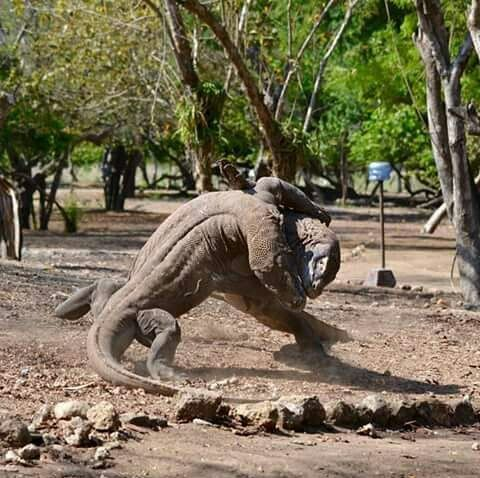 How To Get To Komodo National Park From Gilli Islands